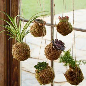 apparel order form v v kokedma hanging string gardens
