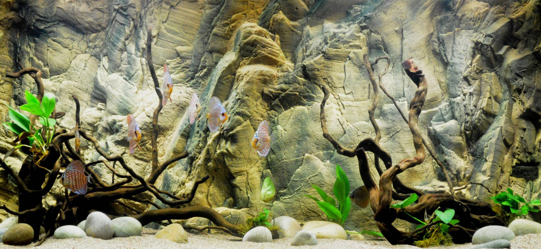 picture regarding Aquarium Backgrounds Printable named Aquarium Historical past Paper Template Place of work