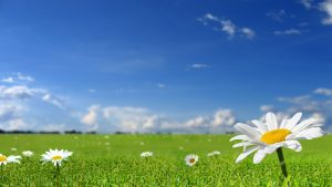 beautiful background pictures beautiful white flower leaf background