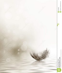 bereavement thank you condolence sympathy design feather drifting water