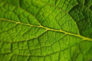 biology cover letter green leaf closeup unsplash