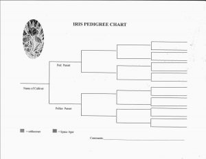 blank pedigree chart iris pedigree chart