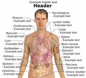 body organ diagram male human anatomy organs male human anatomy anatomy chart body