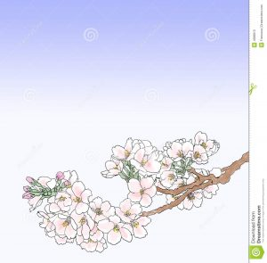 chef business cards cherry blossom illustration