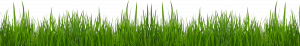 contact page html free grass clip art pictures clipart grass