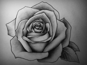 drawing of rose best rose drawing art
