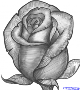drawing of rose how to draw a rose bud rose bud