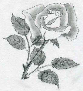 drawing of rose rose drawings
