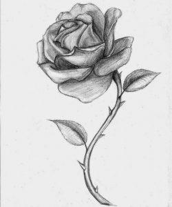 drawing of rose roses drawings