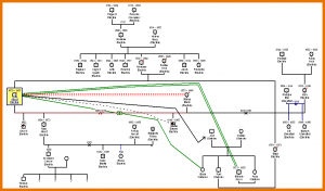 example of genogram genogram templates einstein