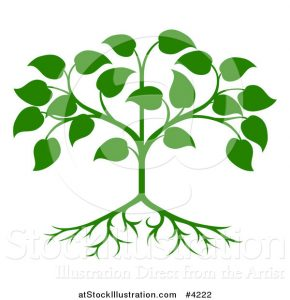 family tree template online vector illustration of a green seedling tree with leaves and roots by atstockillustration