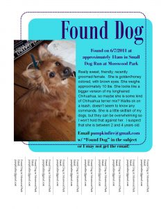 fre cv template found dog flyer