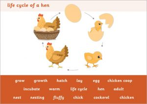 free editable newsletter templates for word hen life cycle word mat prev