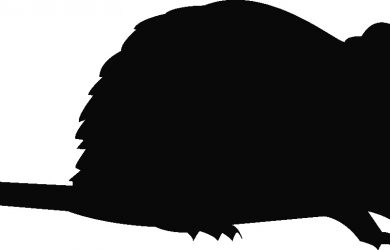 free program template rodent silhouette