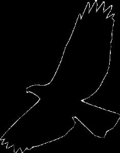 free psd logo hawk psd