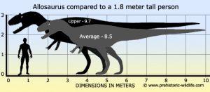 height vs weight chart allosaurus size