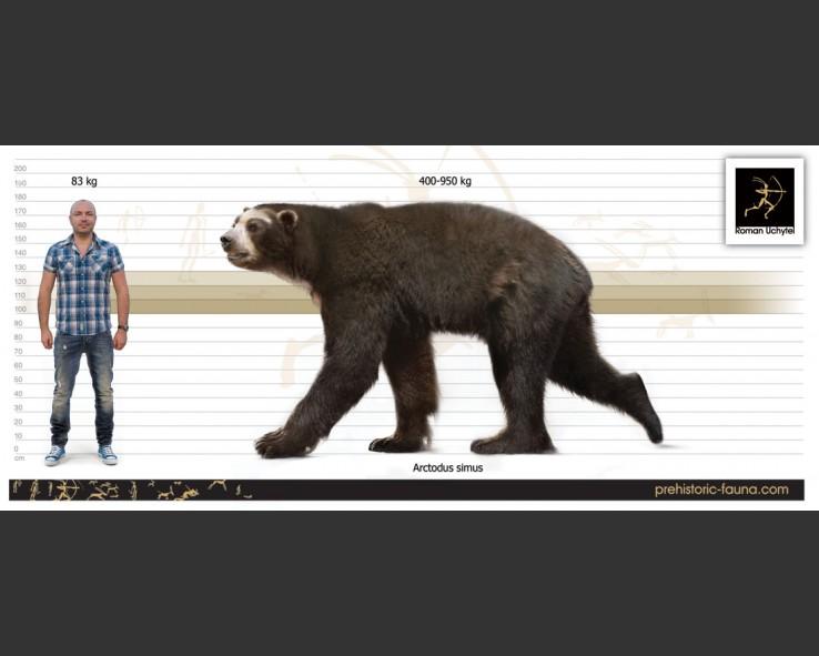 height vs weight chart
