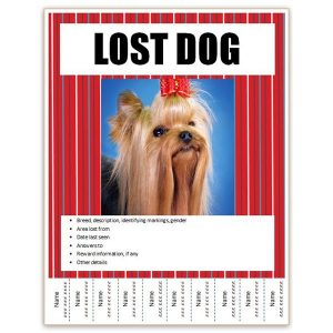 lost dog template cedfdcafabeccfaccc large