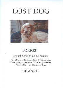lost dog template lostdog