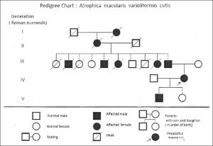 pedigree chart template ijdvl f