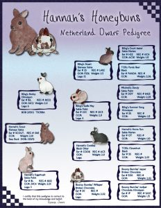 pedigree chart template netherland dwarf custom pedigree small