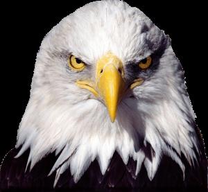 t shirt graphic design software bald eagle transparent image
