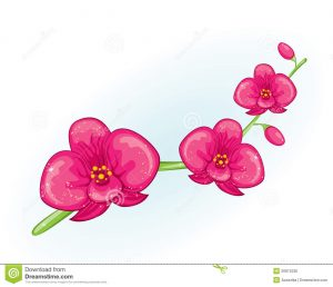 tropical flowers drawing pink orchid branch