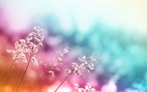 weddings backgrounds images abstract flowers hd wallpapers
