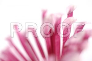 weddings backgrounds images p